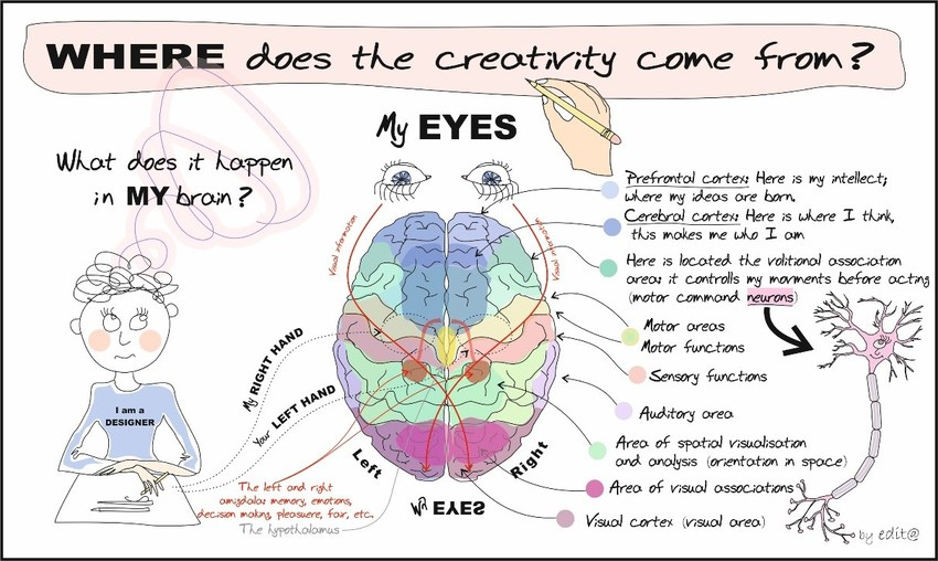 Functions-of-the-brain-which-play-role-in-creativity